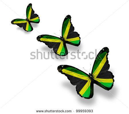 Three Jamaican flag butterflies