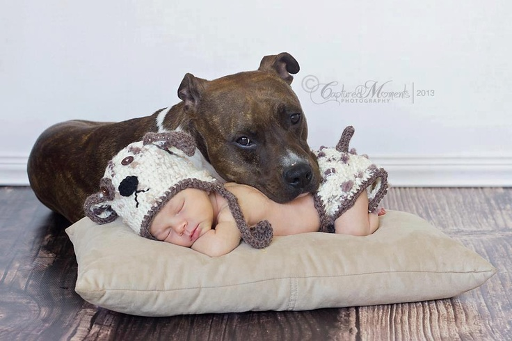 adorabull- I'd never allow my dog (no matter the breed) to rest his head on my baby like this though