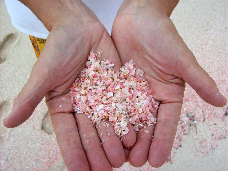 """Résultat de recherche d'images pour """"Rêves de plages : Bahamas"""""""