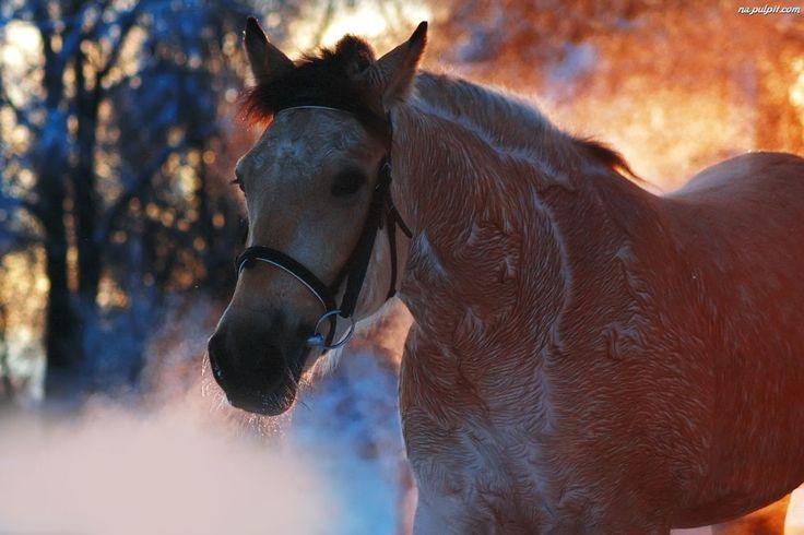Jesieni, Koń, Kolory