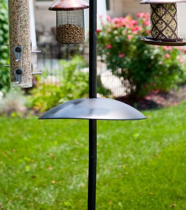 Metal Squirrel Baffle Black Squirrel Proof Bird Feeders | Be A Better Host To Your Beautiful Visitors