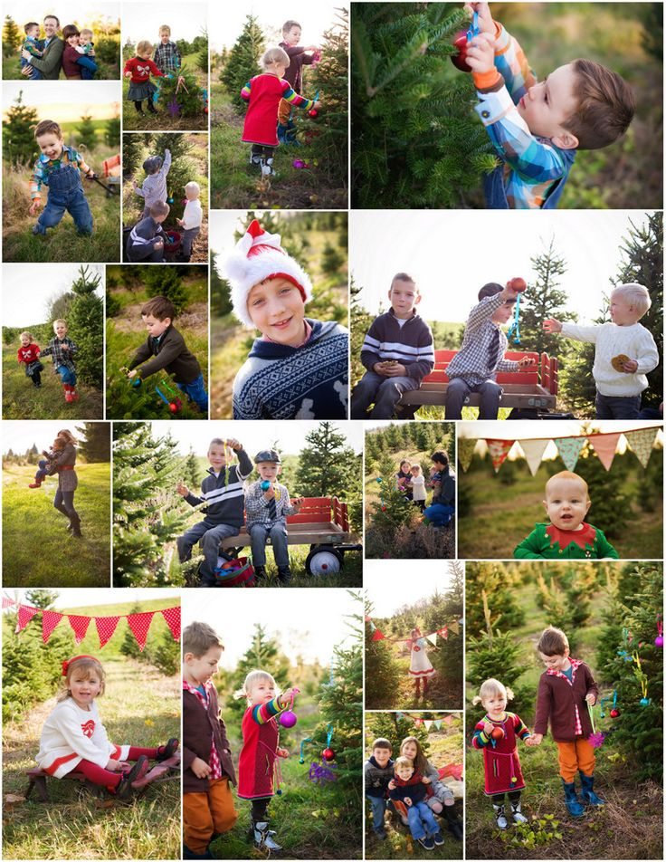 Christmas Tree Farm Madison Wi