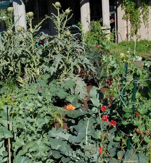 7 Best Images About Polyculture On Pinterest Gardens