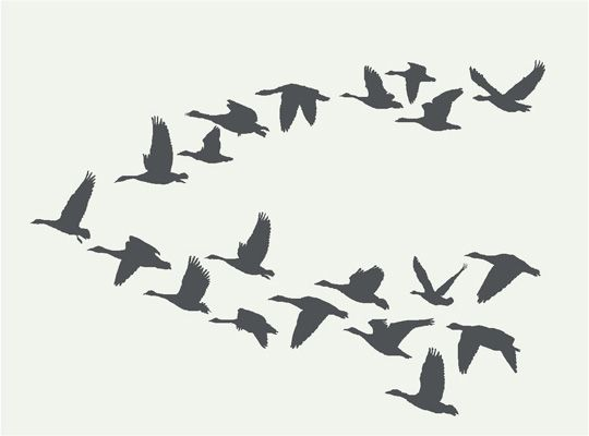 Vogels in vlucht muurstickers