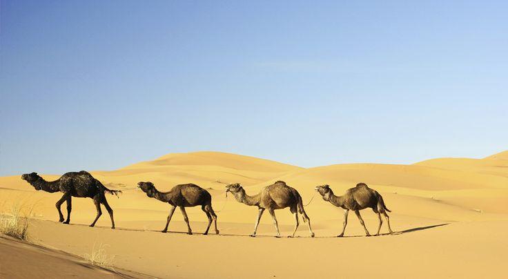 Kahden viikon kiertomatkalla ei jätetä kiveäkään kääntämättä Marokon värikkääseen historiaan ja elävään paimentolaiskulttuuriin tutustuttaessa. Matkaa taitettaessa Atlas-vuoriston terävät huiput vaihtuvat Saharan hiljaisuuteen, Casablancan vilinään ja Agadirin rantoihin. Kiertomatkan ohjelma: Agadir 1 yö – Ouarzazate 1 yö – Merzouga 1 yö – Fes 2 yötä – Rabat 1 yö – Casablanca 1 yö – Marrakech 2 yötä – Essaouira 1 yö – Agadir 4 yötä. #Kiertomatkat #Aurinkomatkat #Marokko #matkailu