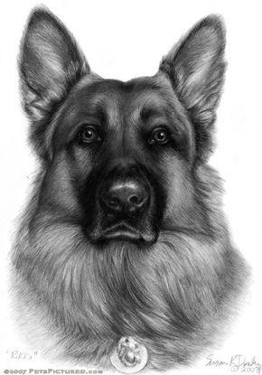 Kleurplaten Honden Duitse Herder.The German Shepherd Mijn Kleurplaten Coloring Hond