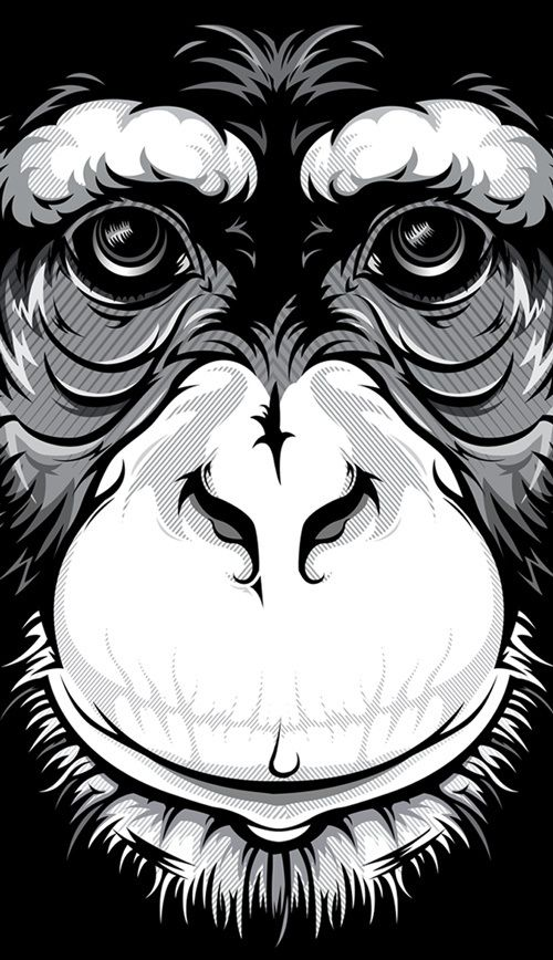Wild Stares by Bernard Salunga, via Behance