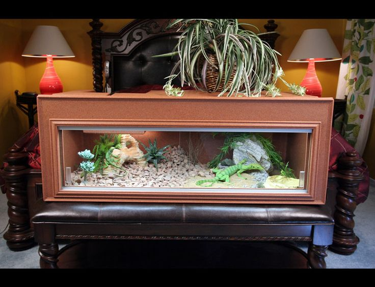 5 Fun Activities for Bearded Dragons | Bearded Dragon Care 101