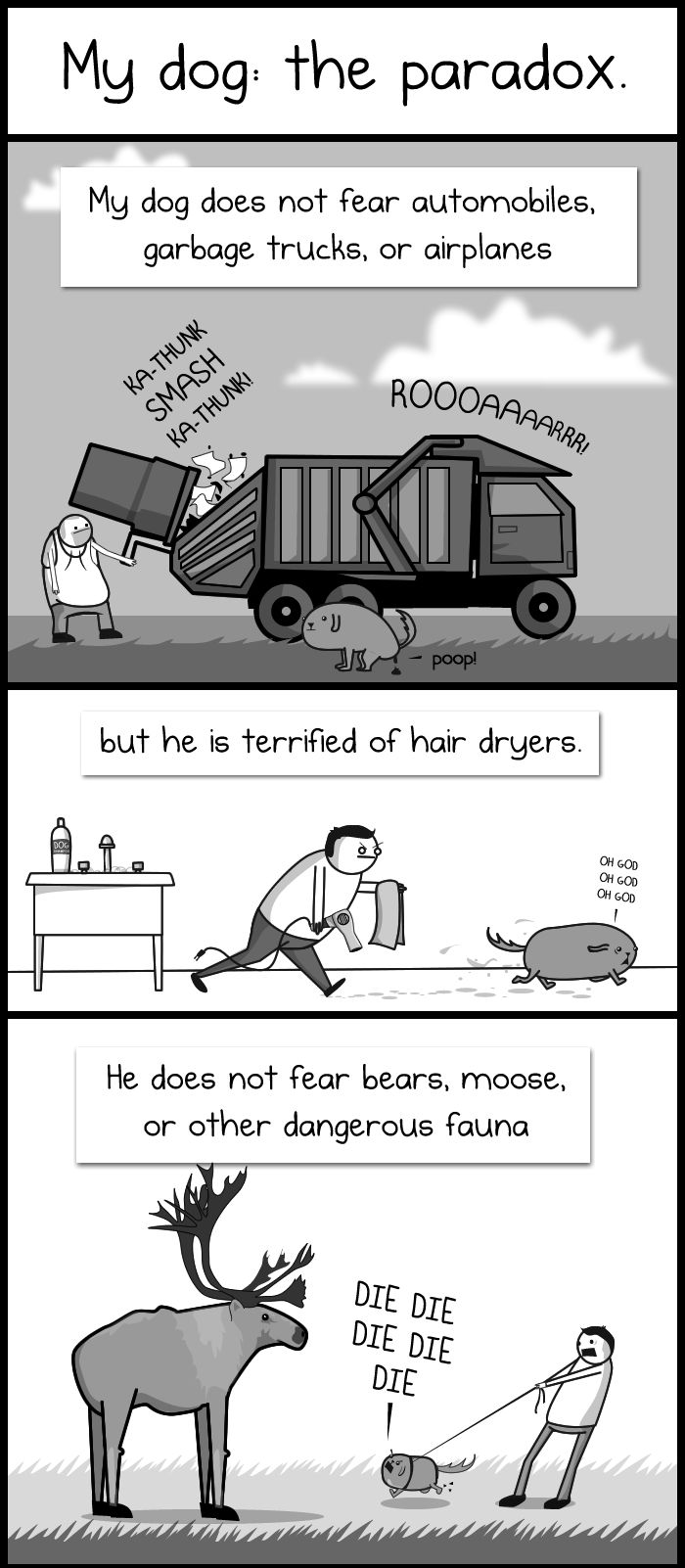 you must click on and read this cartoon, it is wonderful, true and hilarious: My dog: the paradox