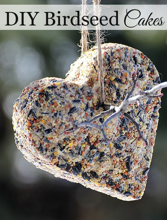 369 best diy inexpensive gift ideas images on pinterest parents diy birdseed suet cakes solutioingenieria Image collections