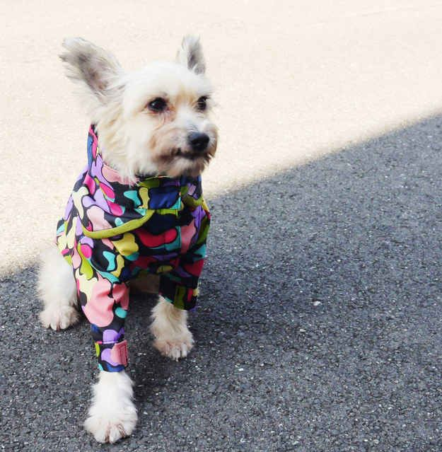 Rain Check | 10 Perfect DIY Projects For Your Pup