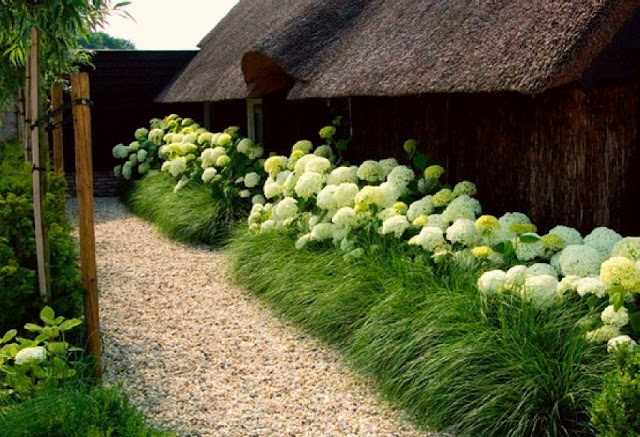 hydrangeas and grasses! I think I would do it with lavender instead, because I love lavender most of all. or oats? oats and lavender?: Cottages Gardens, Hedges, Gardens Design Ideas, Modern Gardens Design, Interiors Design, Fountain Grass, Ornaments Grass, Interiors Gardens, Hydrangeas