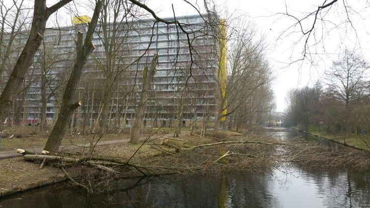 De bomen aan het Strausspad worden gerooid.  2017-02-09