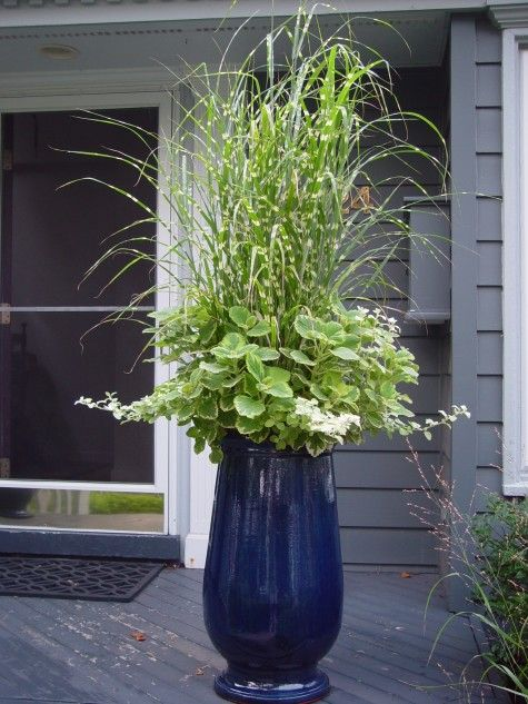 Perfect plant bination for this beautiful blue glazed container