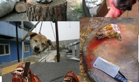 Facebook: Add animal abuse to reporting deleting criteria for animal cruelty pages | Please sign and share petition. Thanks.