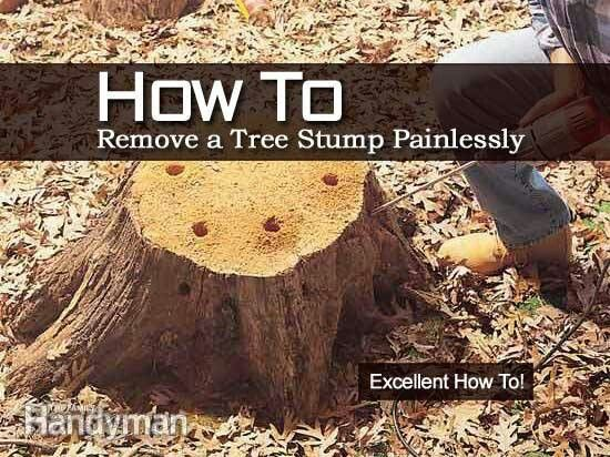 Removing tree stump
