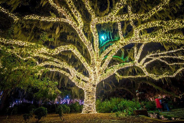 Night of a Thousand Candles. (Credit Brookgreen Gardens