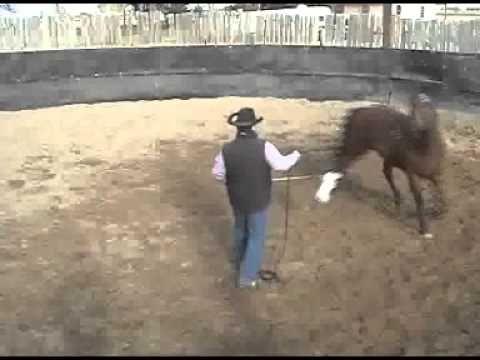 Mike Brashear Ft. Lupton, CO #EquineComebackChallenge