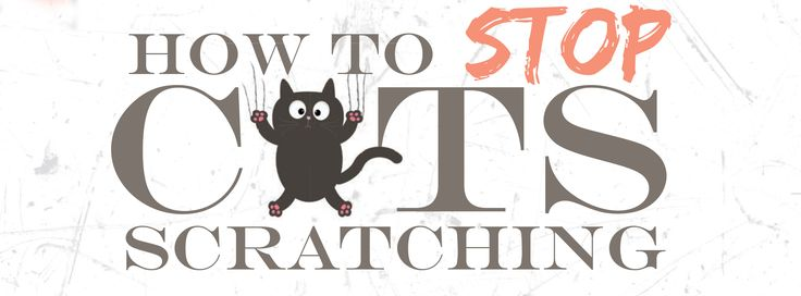 Cats are fluffy and fun, but they do love to scratch. Here are some tips on how to keep your most prized pieces of furniture away from those claws. http://www.naturalmedicine.co.za/index.php?option=com_content&view=article&id=13201:how-to-stop-cats-scratching&catid=2730:animal-corner&Itemid=179  #cats #cat #pets #cute #kittens #kitty