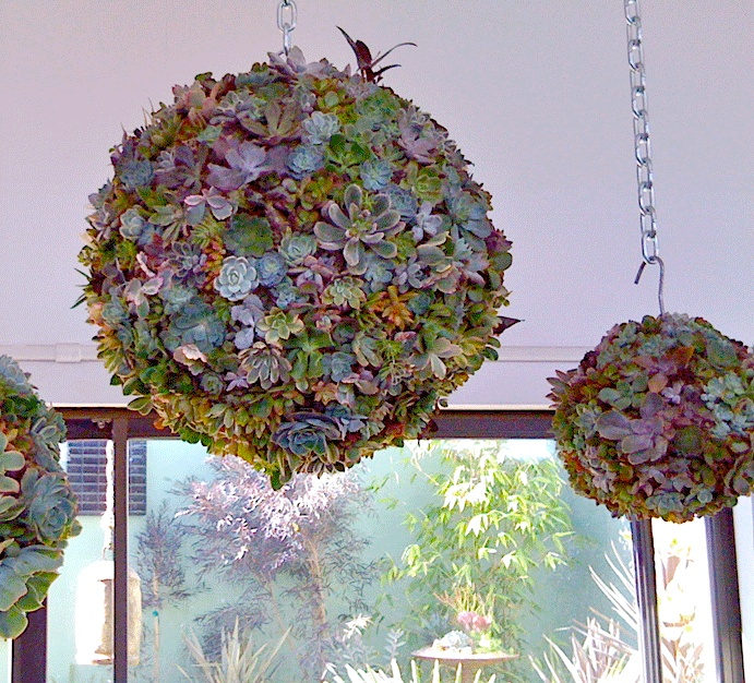 15 Tiny Outdoor Garden Ideas For The Urban Dweller: 17 Best Images About Hanging Succulent Balls On Pinterest