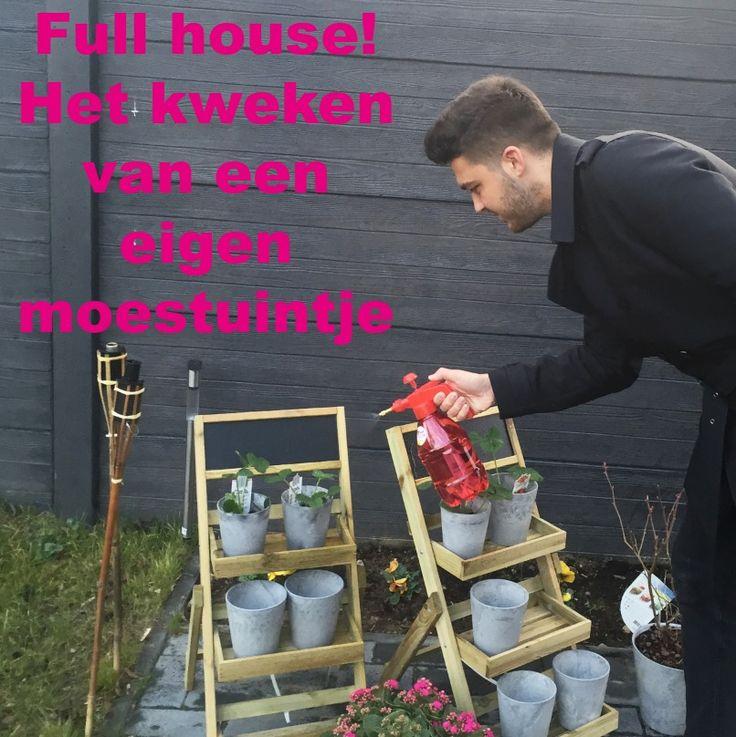 Sinds kort krijg je bij de Albert Heijn weer moestuintjes bij de boodschappen! Inmiddels hebben wij er 4: Tijm, rucola, spinazie en tuinkers,  en eigenlijk vonden wij het wel heel leuk (en lekker groen) om dit aan te vullen. Want hoe leuk en puur is het om je eigen kruiden en groentes te kweken, niet waar?!  -> http://www.budgi.nl/huis-houden/full-house-het-kweken-van-een-eigen-moestuintje/