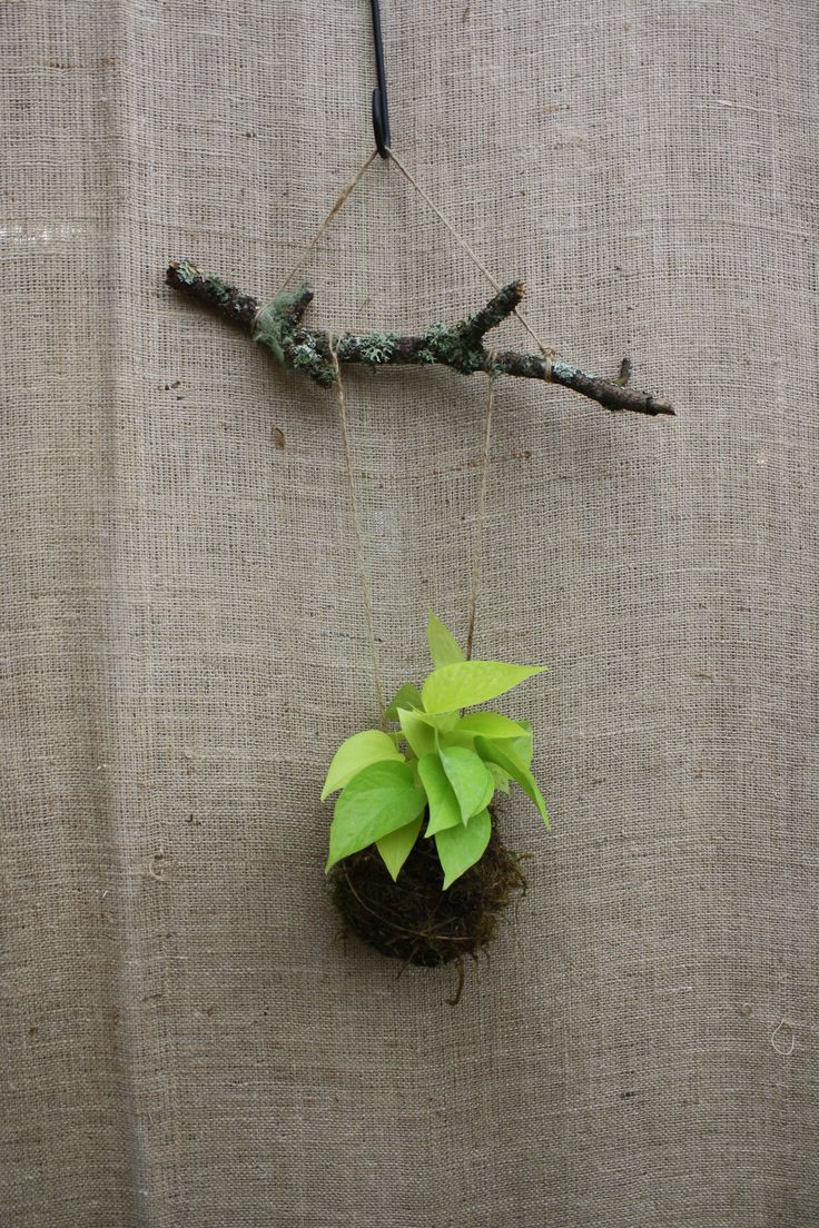 Simple Tutorial On How To Make Your Own String Garden Aka Kokedama. Click  Above U0026