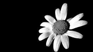 Voces del Cerro Aislado: Negro y blanco