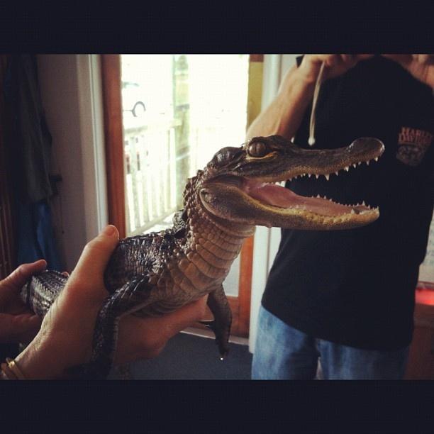 Jul, tu penses qu'on peut trouver des bébés alligators dans des pots?