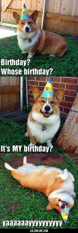 Birthday? Whose Birthday? It's My Birthday?#funny #lol #lolzonline