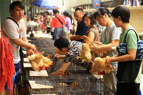 Chicken market in Guangzhou, China.  We've been on this market already a few years ago, and since then, a lot of things have improved; the cages are better and the area is a lot cleaner than before. The smell is still the same though - you're really close to fainting!