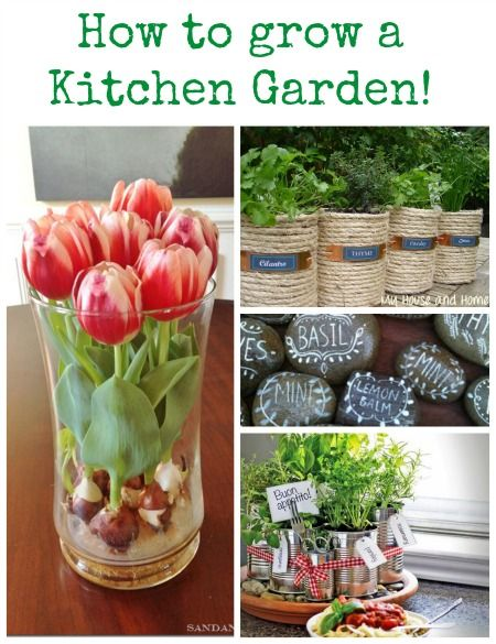 How to grow a kitchen garden! Tips on growing herbs and creating unique containers!