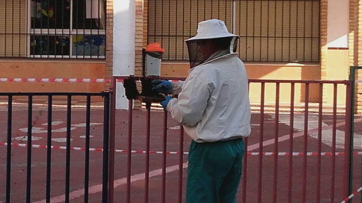 Un enjambre de abejas deja sin clase a 200 niños en el colegio Padre Poveda de Linares