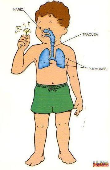 actividades para enseñar el sistema respiratorio en el nivel inicial - Buscar con Google