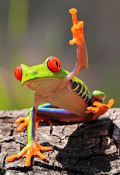 Red-eyed tree frog via www.Facebook.com/PositivityToolbox