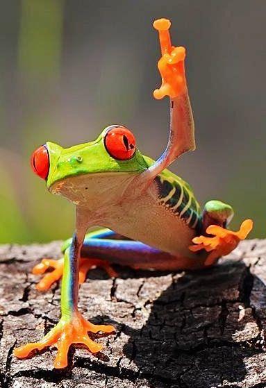 Red-eyed tree frog via www.Facebook.com/PositivityToolbox