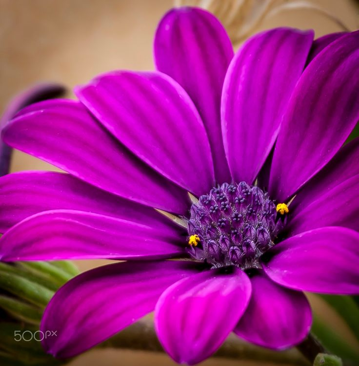 Purple Flower - Beautiful purple flower