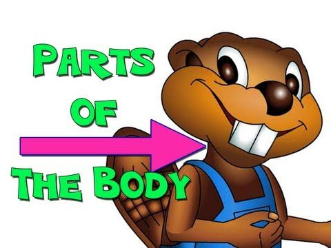 Busy Beaver Songs for Learning ~ Parts of the Body - English for Kids