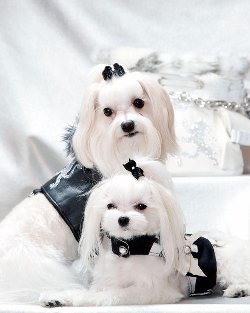 Harry & Stella for Kiki Hamann Canine Couture