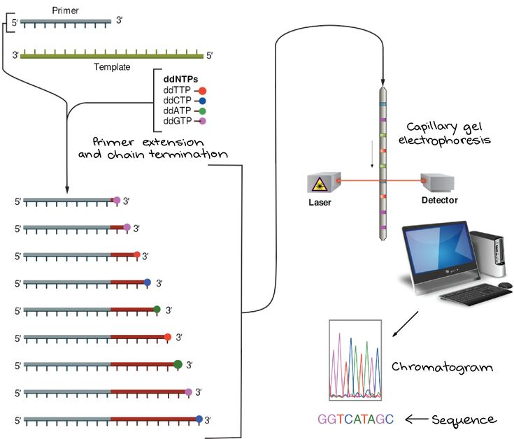 Khan Academy does a nice job explaining the connection and difference between Next-Gen and Sanger sequencing methods