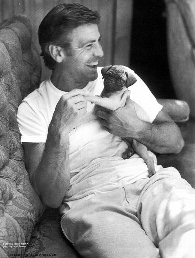 George Cloony + Pug puppy = sexiest Pug alive? www.dogs.thefuntimesguide.com