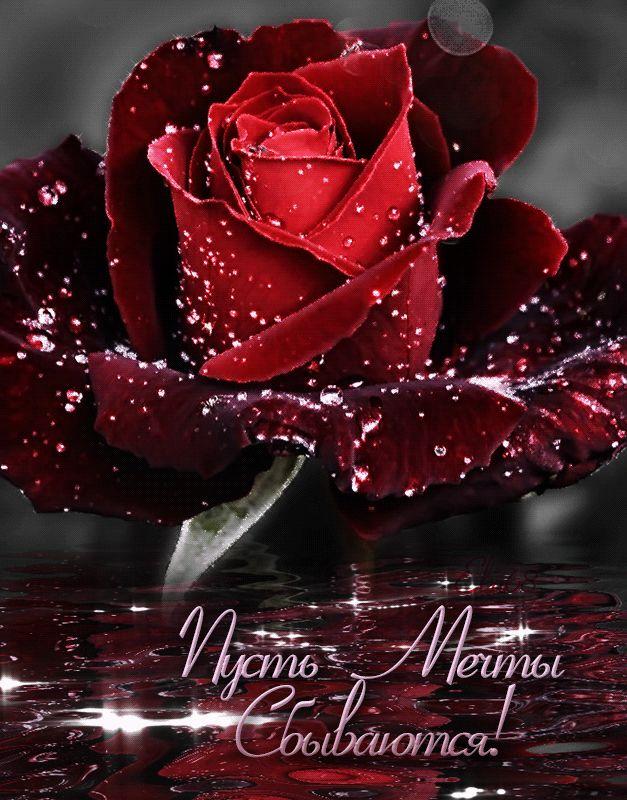 Розы картинки анимация любовная