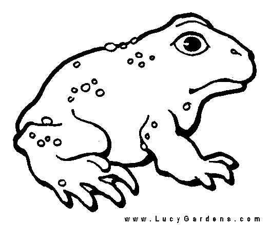 frog and toad coloring page 1gif 524439