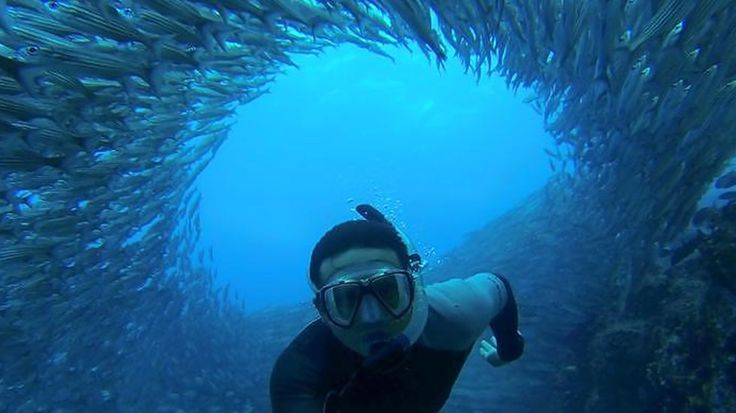 Diver surrounded by fish in the Galapagos #kilroy #snorkeling