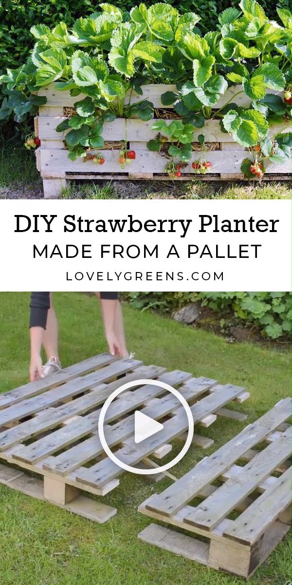 The best way to make a Strawberry Pallet Planter
