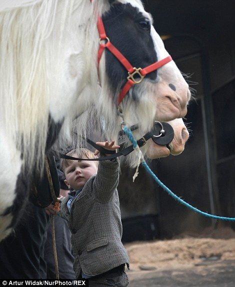 A little boy reaches up to stroke one of the horses...