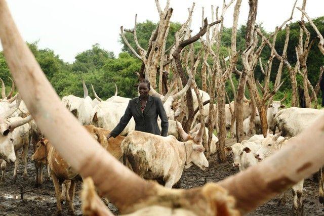 Tausende sind den Konflikten bereits zum Opfer gefallen. Unzählige Zivilisten, wie Ngueny Mabior Ngueny, wurden zur Flucht im eigenen Land gezwungen.  Auf der Rinderfarm von Ngueny Mabior Ngueny  #Help #Südsudan #beneficiary #animal #farm