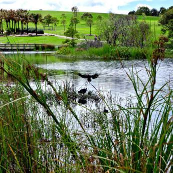 Featured image of Bird survey event at Sydney Park