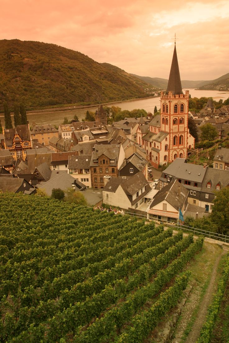 Cruise past miles of Rhine Valley vineyards, villages, and castles on Day 4 of the Rick Steves Family Europe: Amsterdam to Rome Tour