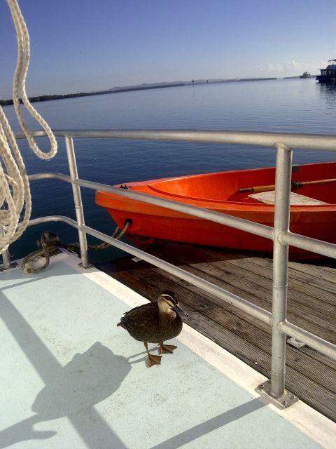 Duck aboard Coomera Houseboat.  #duck #coomerahouseboats   #Goldcoast  #houseboat  #holiday  #holidays  #boating  #fishing  #Houseboating