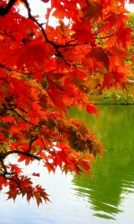 Beautiful fall lake